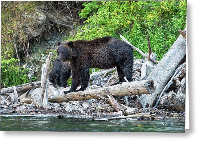 From The Great Bear Rainforest Greeting Card by Scott Warner