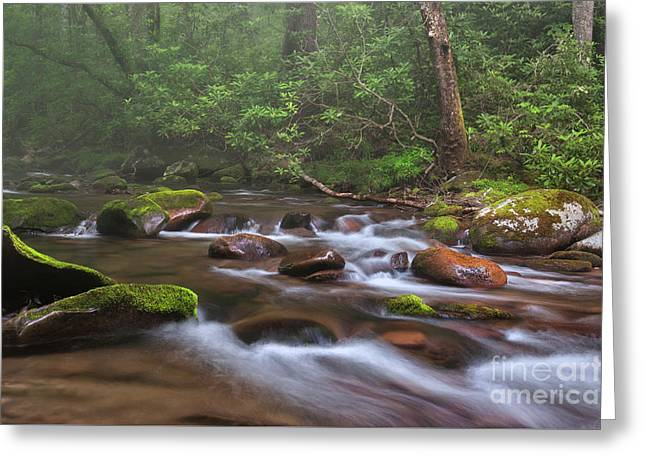 From The Mist - Oconaluftee River Greeting Card by Thomas Schoeller