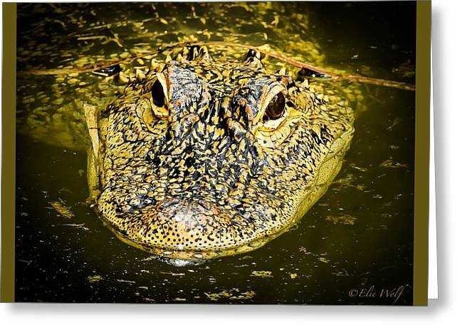 From The Series I Am Gator Number 5 Greeting Card