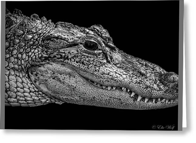 From The Series I Am Gator Number 9 Greeting Card