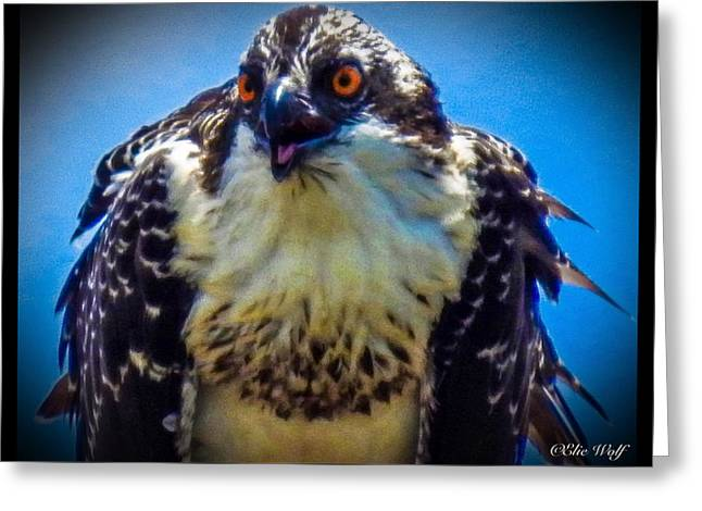 From The Series The Osprey Number 3 Greeting Card