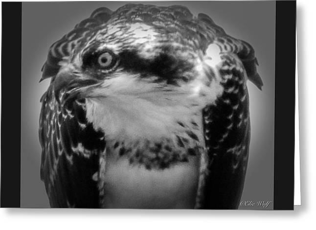 From The Series The Osprey Number Two Greeting Card