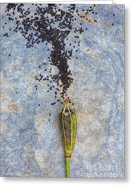 From Tiny Seeds Greeting Card by Tim Gainey
