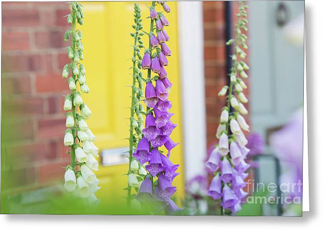 Front Garden Foxgloves Greeting Card by Tim Gainey