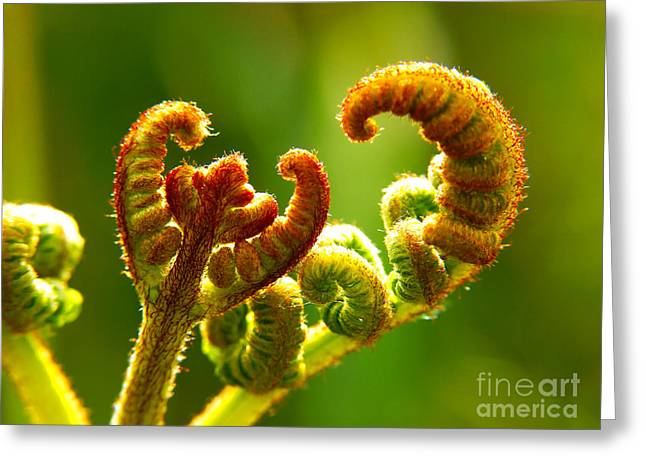 Frond Fern Greeting Card