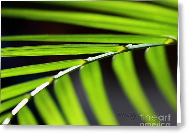 Frond Geometry Greeting Card