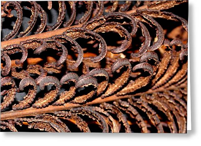 Greeting Card featuring the photograph Fronds  by Diane Merkle