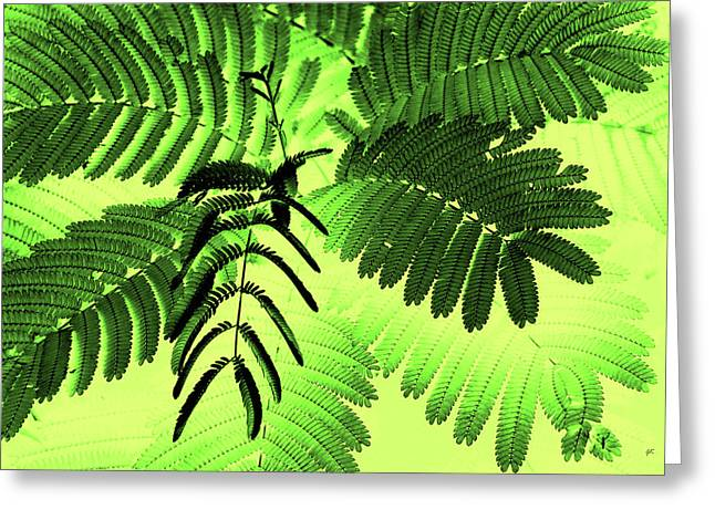 Plant Stretched Canvas Greeting Cards - Fronds Greeting Card by Gerlinde Keating - Keating Associates Inc