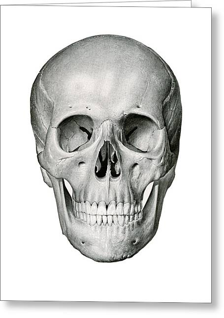 Frontal View Of Human Skull Greeting Card