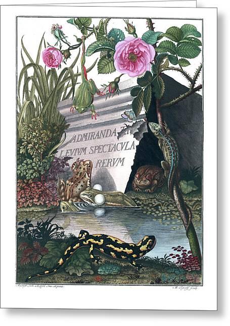 Frontis Of Historia Naturalis Ranarum Nostratium Greeting Card
