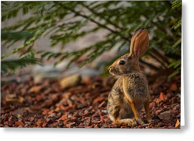 Greeting Card featuring the photograph Frontyard Bunny by Dan McManus