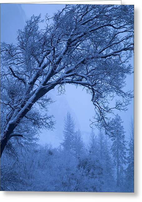 Frost Blue Greeting Card by Vincent James