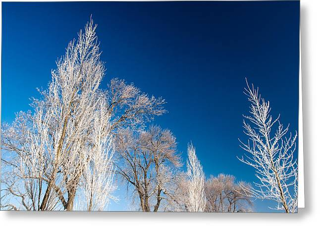 Frost Covered Trees Greeting Card by Todd Klassy