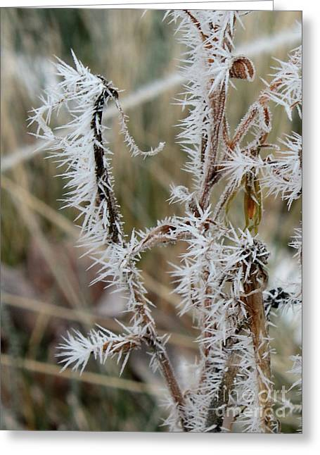 Frost Every Which Way Greeting Card