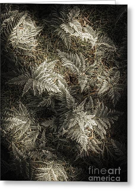 Frost Ferns Greeting Card by Jorgo Photography - Wall Art Gallery