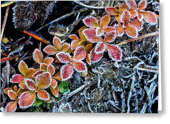 Frost Line Greeting Card