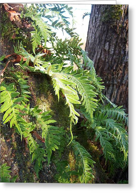 Frost On Ferns Greeting Card by Ken Day