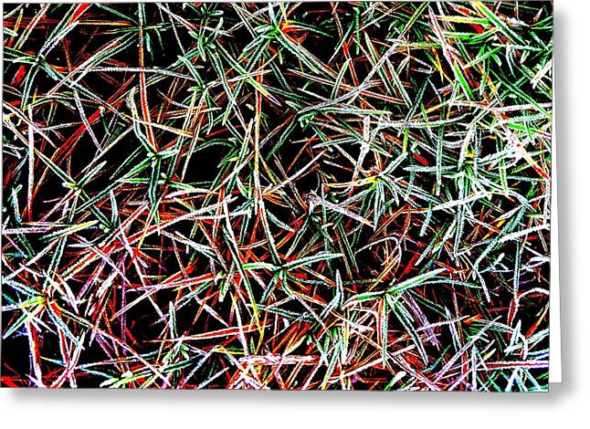 Frost On The Grass Greeting Card