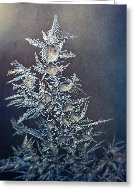 Frost Greeting Card by Scott Norris