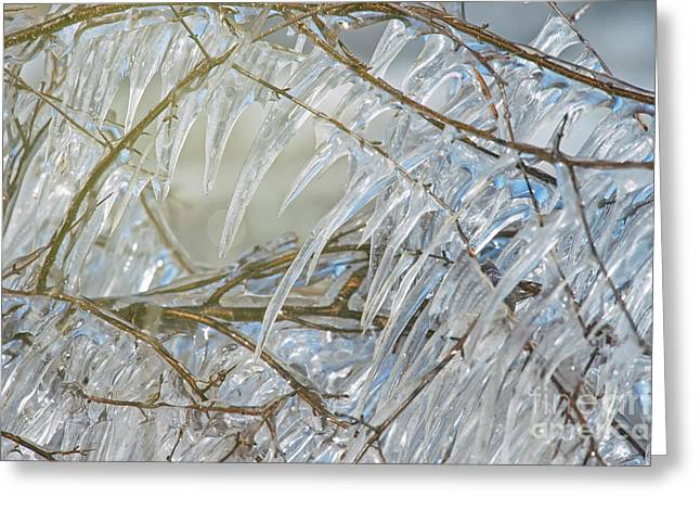 Greeting Card featuring the photograph Frostbite.. by Nina Stavlund