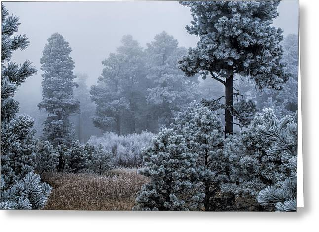 Frosted Greeting Card by Alana Thrower