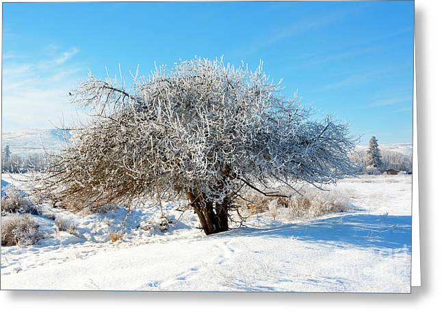 Frosted Apple Tree Greeting Card by Mike Dawson