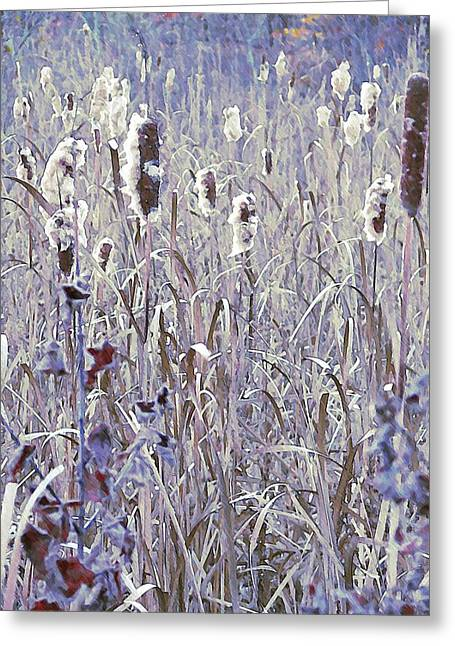 Frosted Cattails In The Morning Light Greeting Card by Joy Nichols
