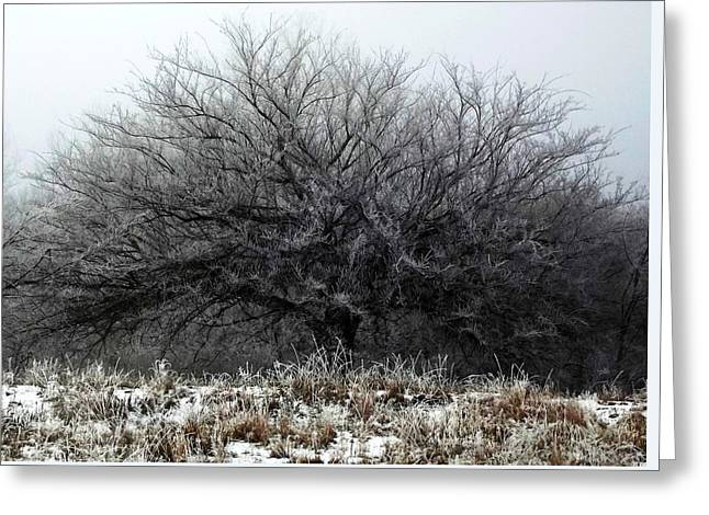Frosted Elm Greeting Card