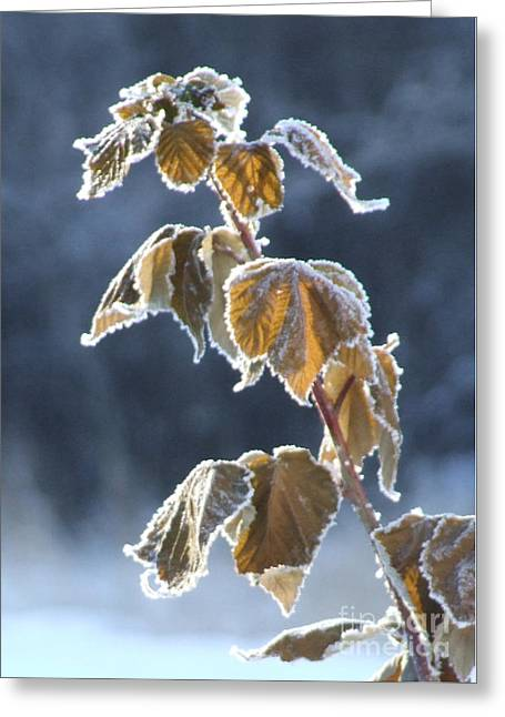 Frosted Greeting Card