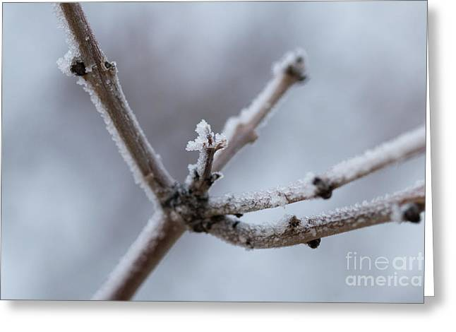 Frosted Morning Greeting Card by Ana V Ramirez