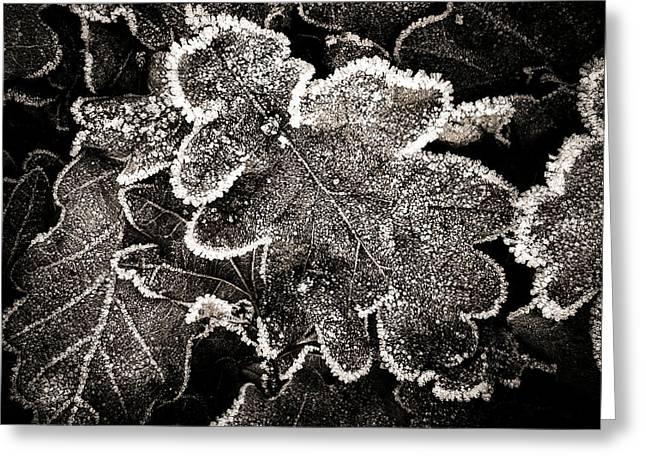 Frosted Oak Leaves . Greeting Card by Bernard Jaubert
