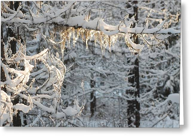 Frosted Pine Branches Greeting Card