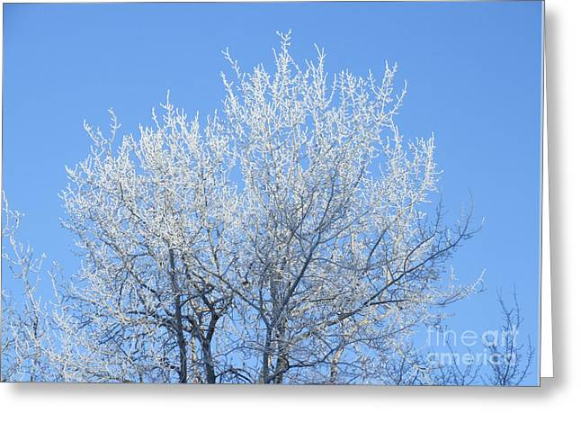 Frosted Poplar Greeting Card
