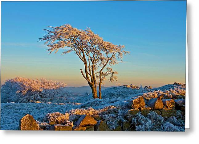 Frosted Tree Greeting Card by Mark Denham