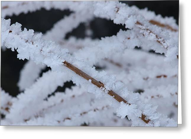Frosted Twigs Greeting Card by DeeLon Merritt