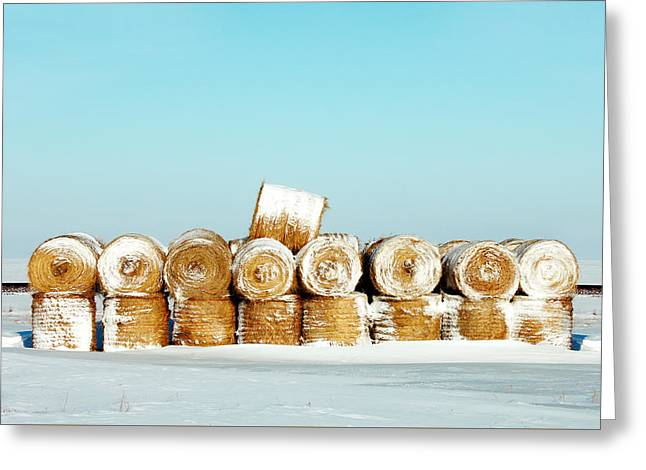 Frosted Wheats Greeting Card by Todd Klassy