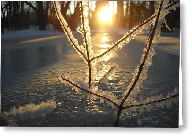 Frosty Branches At Sunrise Greeting Card