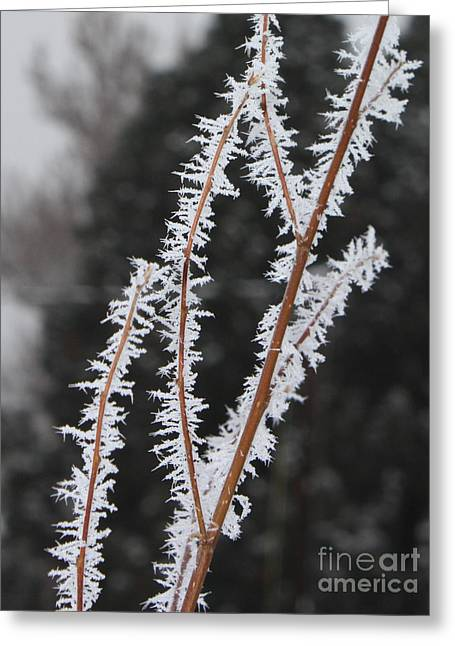 Frosty Branches Greeting Card by Carol Groenen