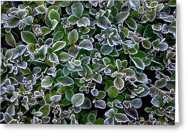 Frosty Hedgerow Greeting Card