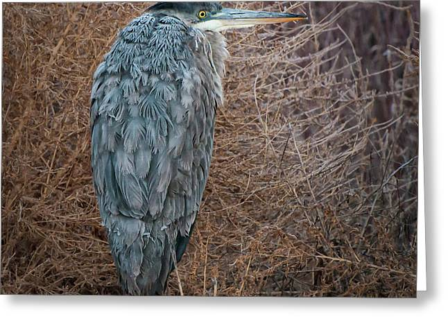 Greeting Card featuring the photograph Frosty Heron by Britt Runyon