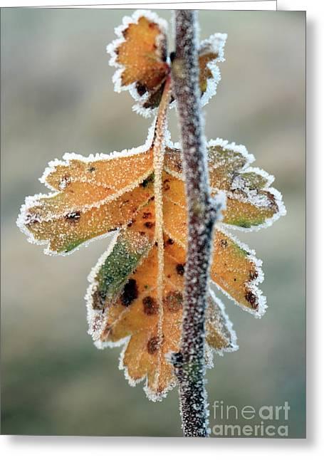 Frosty Leaf Greeting Card