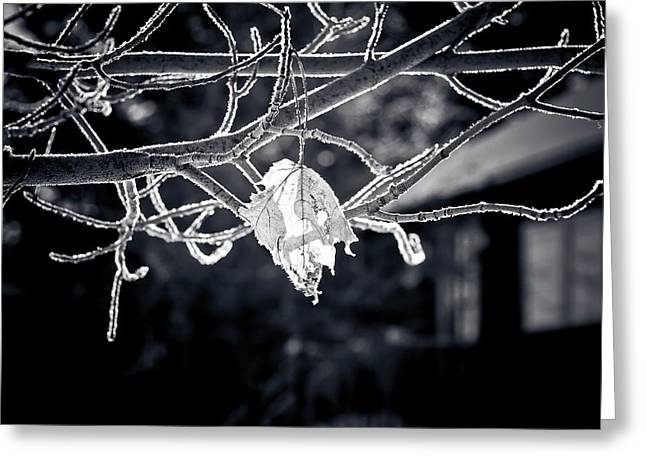 Frosty Morn  Greeting Card by Maggie Terlecki