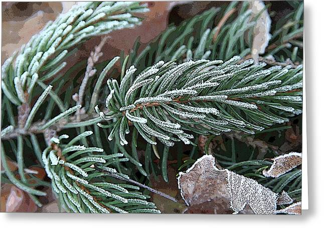 Frosty Pine Branch Greeting Card