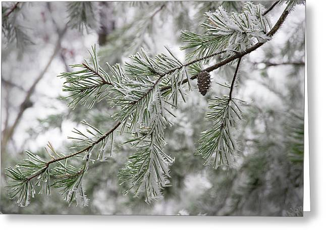 Frosty Pinecone Greeting Card by Mike Eingle