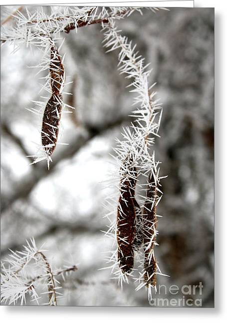 Frosty Seed Pods Greeting Card