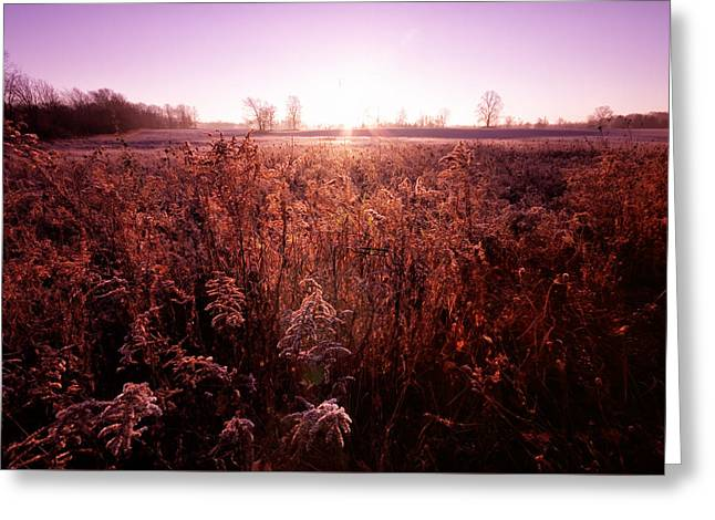 Greeting Card featuring the photograph Frosty Sunrise by Lars Lentz