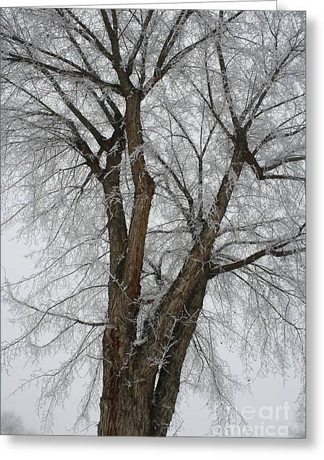 Frosty Tree Greeting Card by Carol Groenen
