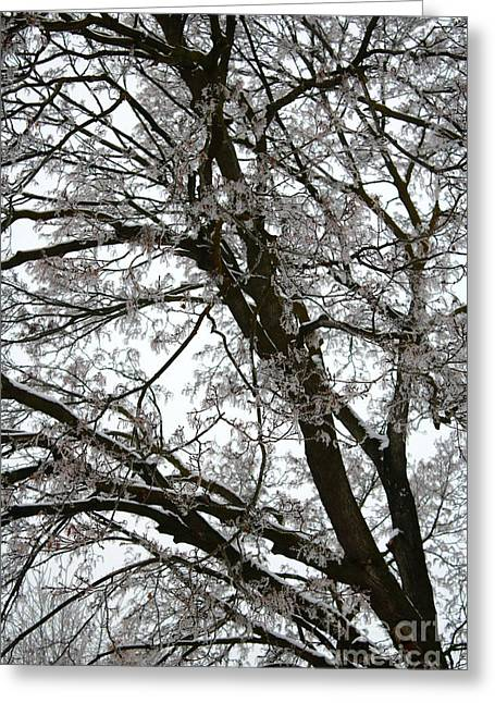 Frosty Tree Limbs Greeting Card by Carol Groenen