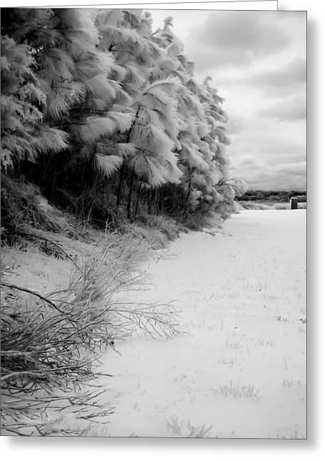 Frosty Treeline Greeting Card