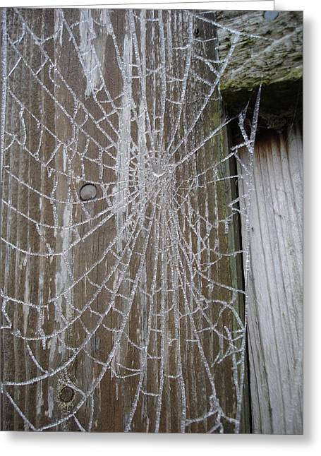 Frosty Web Greeting Card